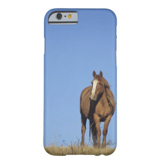 Spanish mustang (Equus caballus), wild horse, Barely There iPhone 6 Case