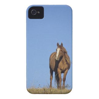 Spanish mustang (Equus caballus), wild horse, Case-Mate iPhone 4 Cases