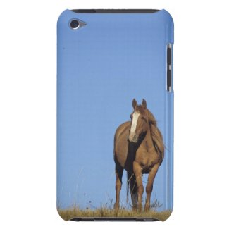 Spanish mustang (Equus caballus), wild horse, iPod Touch Case-Mate Case