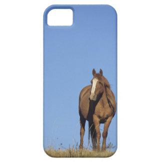 Spanish mustang (Equus caballus), wild horse, iPhone 5 Cases