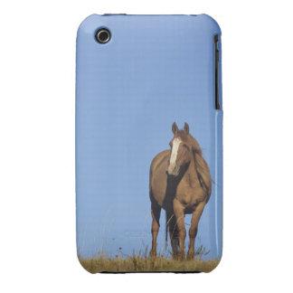 Spanish mustang (Equus caballus), wild horse, iPhone 3 Case