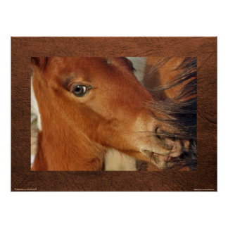 Spanish Mustang Foal & Mother's Mane Photo Poster