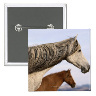 Spanish Mustangs 2 Inch Square Button