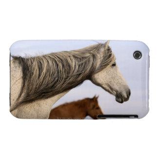 Spanish Mustangs iPhone 3 Case-Mate Cases