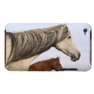 Spanish Mustangs iPod Case-Mate Cases