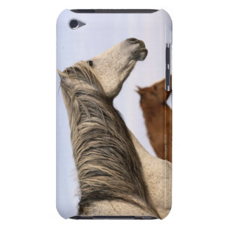 Spanish Mustangs iPod Touch Case