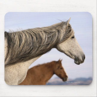 Spanish Mustangs Mouse Pad