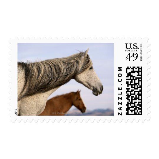 Spanish Mustangs Postage