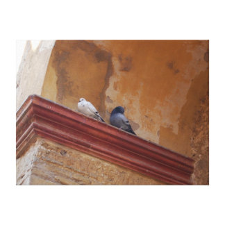 Spanish Pigeons Wrapped Canvas