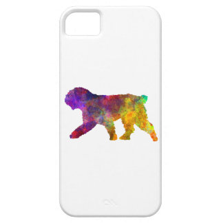 Spanish Water Dog in watercolor iPhone SE/5/5s Case