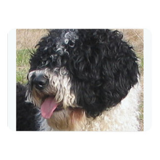 Spanish Water Dog.png Card