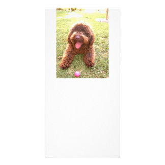 spanish water dog w toy.png card