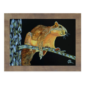 Sparkie the squirrel: relaxing postcard