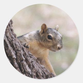Sparkie the Squirrel   sticker