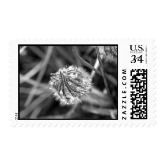 Sparkling Crocus in Black and White Postage