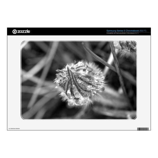 Sparkling Crocus in Black and White Samsung Chromebook Decal