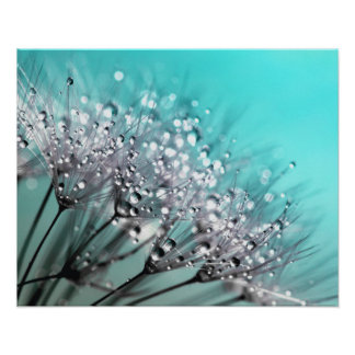 Sparkling Dew Dandelion Aqua Cyan Background Poster