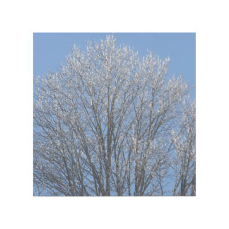 Sparkling Icy Tree Top in Morning Sun Gallery Wrap