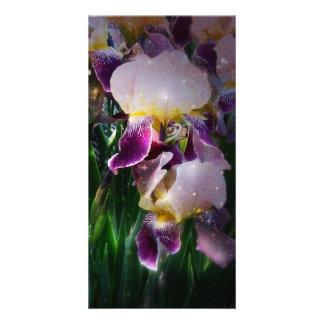 Sparkling Irises Photo Greeting Card