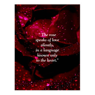 Sparkling Rose Detail Postcard