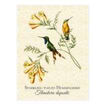 Sparkling Tailed Hummingbird Vintage Art Postcard