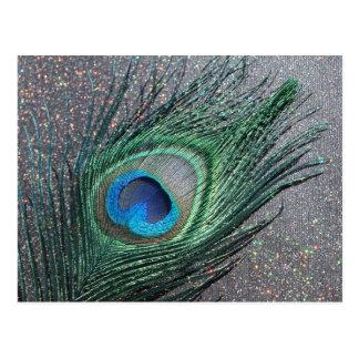 Sparkly Black Peacock Feather Still Life Postcard
