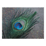 Sparkly Black Peacock Feather Still Life Poster