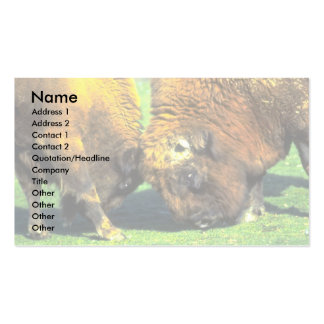 Sparring buffalo business cards