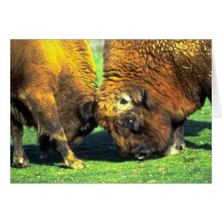 Sparring buffalo cards