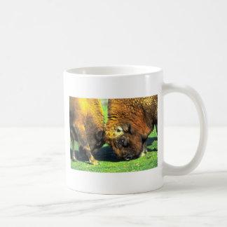 Sparring buffalo mug