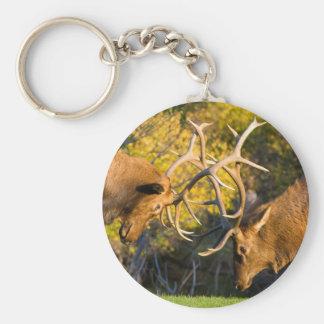 Sparring  Bull Elk Keychain