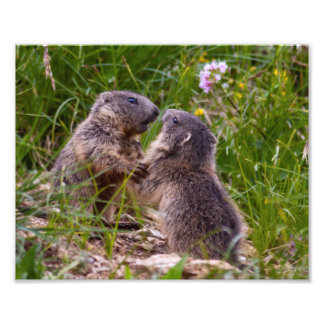 Sparring Partners Print Photo