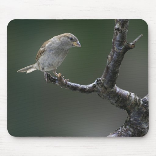 Sparrow  1 mouse pad