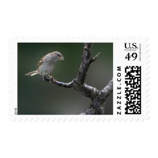 Sparrow  1 postage