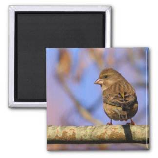 Sparrow 2 Inch Square Magnet