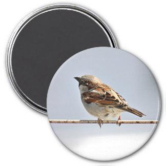 Sparrow 3 Inch Round Magnet