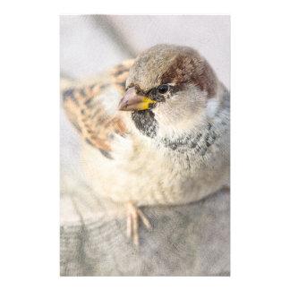 Sparrow - After The Transatlantic Flyer