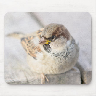 Sparrow - After The Transatlantic Mouse Pad