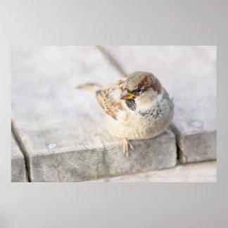Sparrow - After The Transatlantic Poster