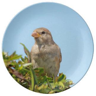 sparrow against blue sky porcelain plate