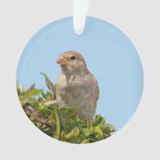 sparrow against blue sky ornament