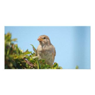 sparrow against blue sky customized photo card