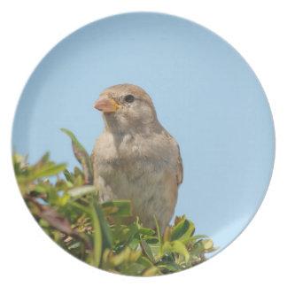 sparrow against blue sky dinner plate