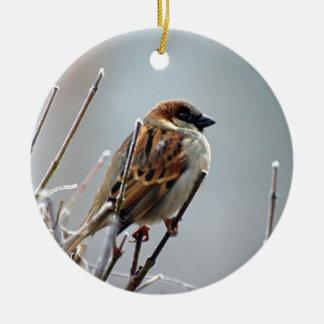 sparrow-bird-animal-nature ceramic ornament