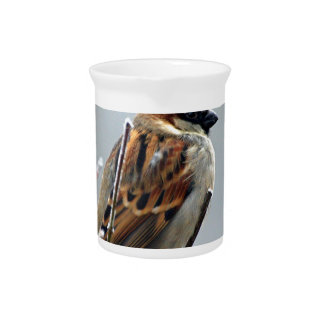 sparrow-bird-animal-nature drink pitcher