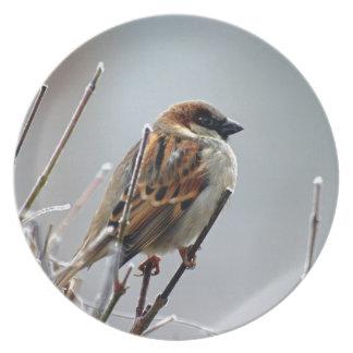 sparrow-bird-animal-nature melamine plate