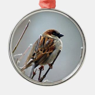 sparrow-bird-animal-nature metal ornament