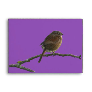 SPARROW BIRD on a Branch Greeting Card Envelope