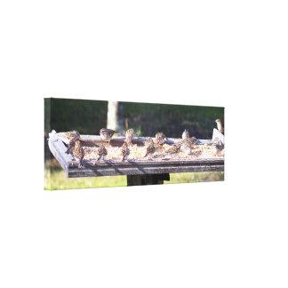 Sparrow Birds at a bird feeder Wrapped Canvas Art