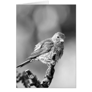 Sparrow - Black & White Greeting Card